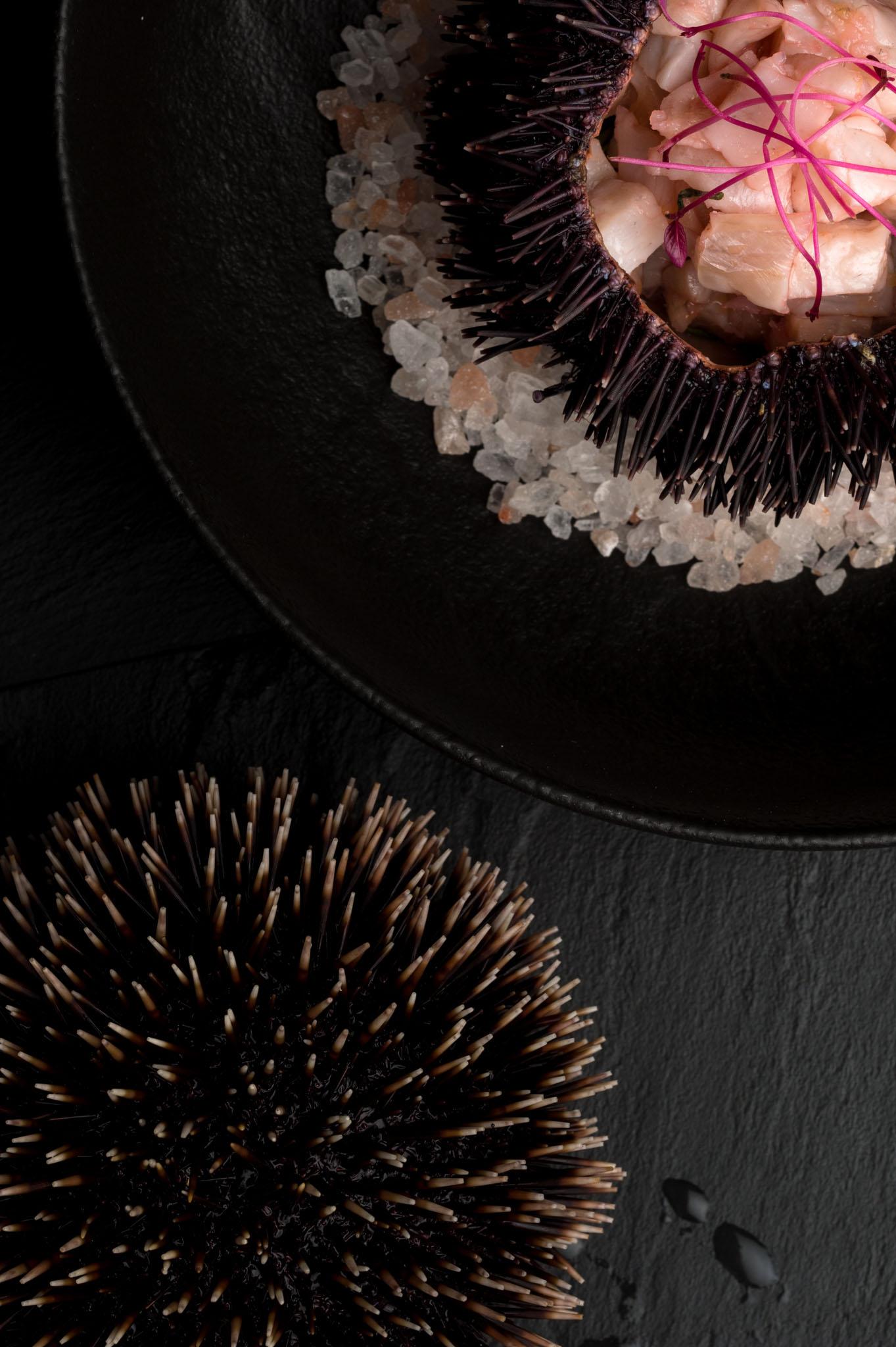 hren | plethora of creativity // AquaSolis food photography